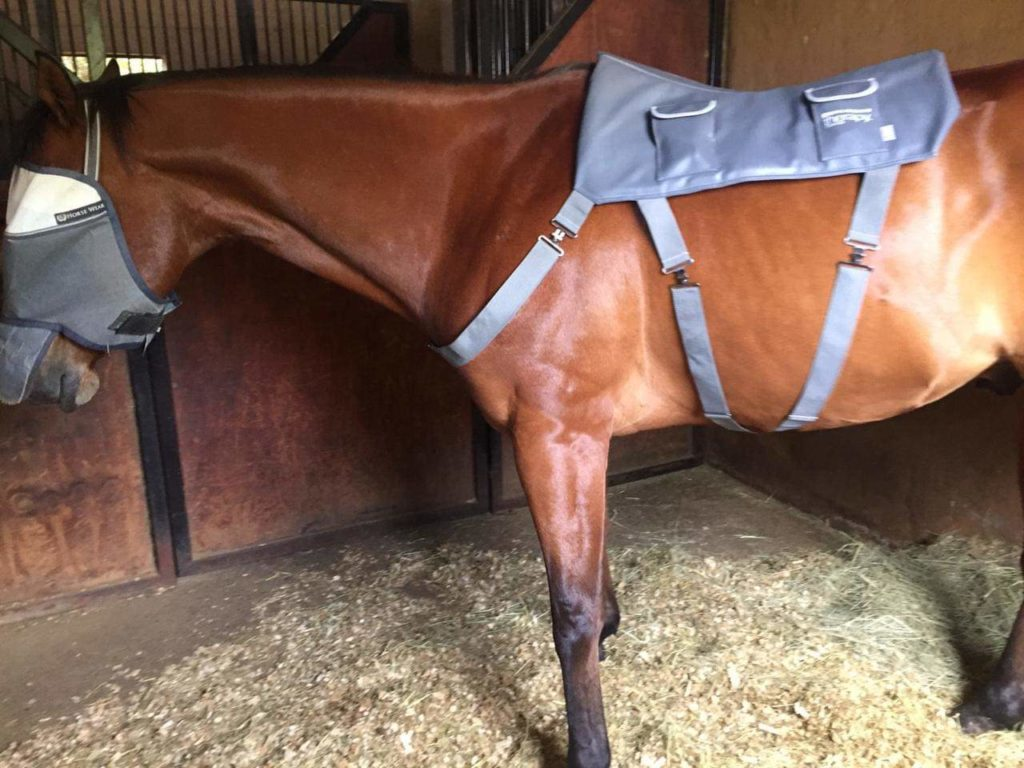 Nap time for Mandy Jones' horse during his Equilibrium Massage Pad treatment